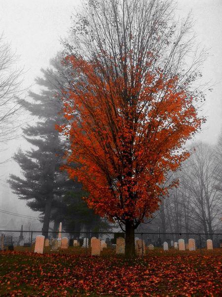Tombstonelovers