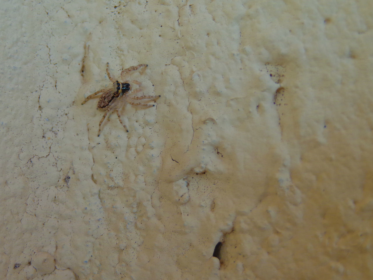 🕷 Animal Themes Animal Wildlife Animals In The Wild Close-up Day High Angle View Insect Nature One Animal Outdoors Spider
