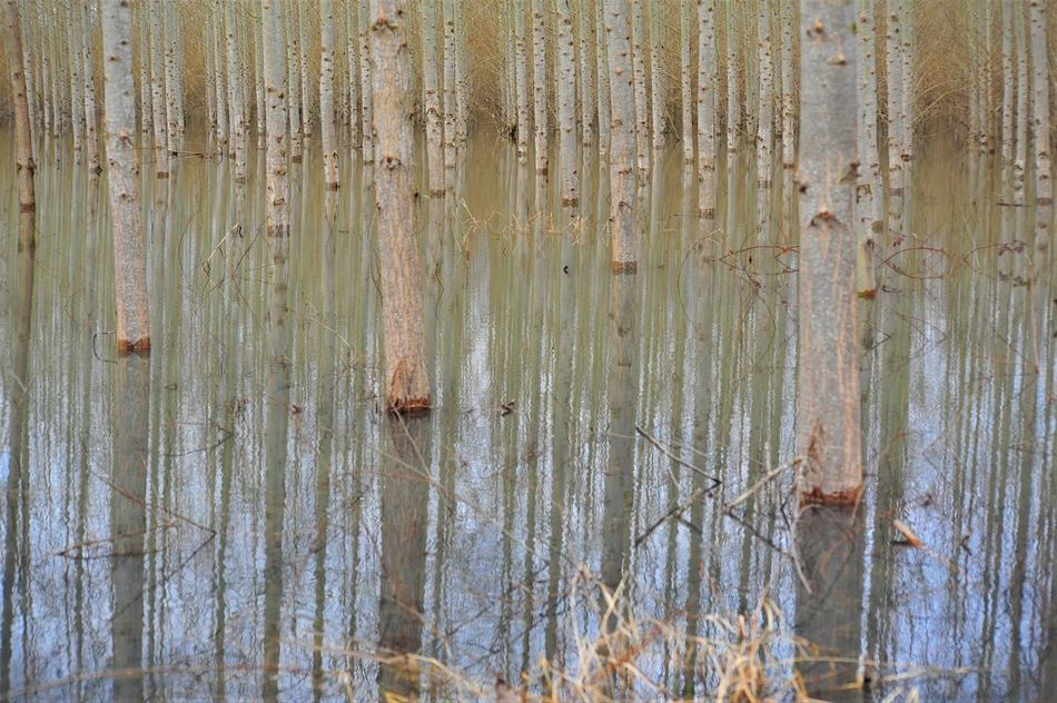 Backgrounds Close-up Cottonwood Trees Day Landscape Nature No People Outdoors Tree Farm Water If Trees Could Speak