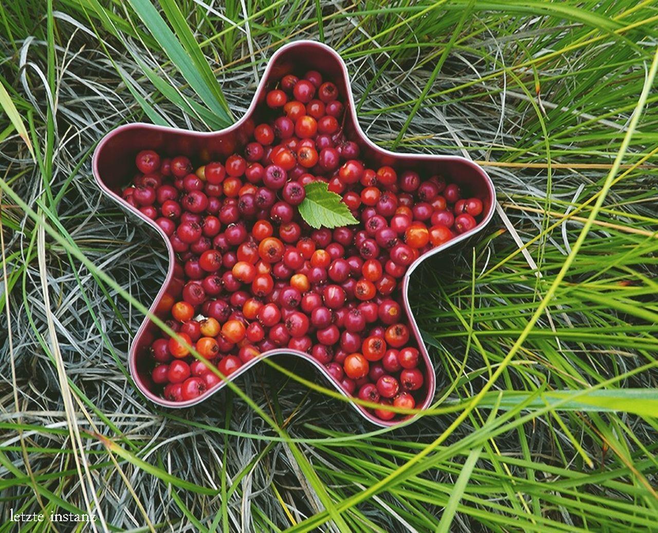 Красная звезда из августовского сбора боярышника) Grass Plants 🌱 Transbaikalia Nature Red Berry Star Wildberry Hawthorn Забайкалье
