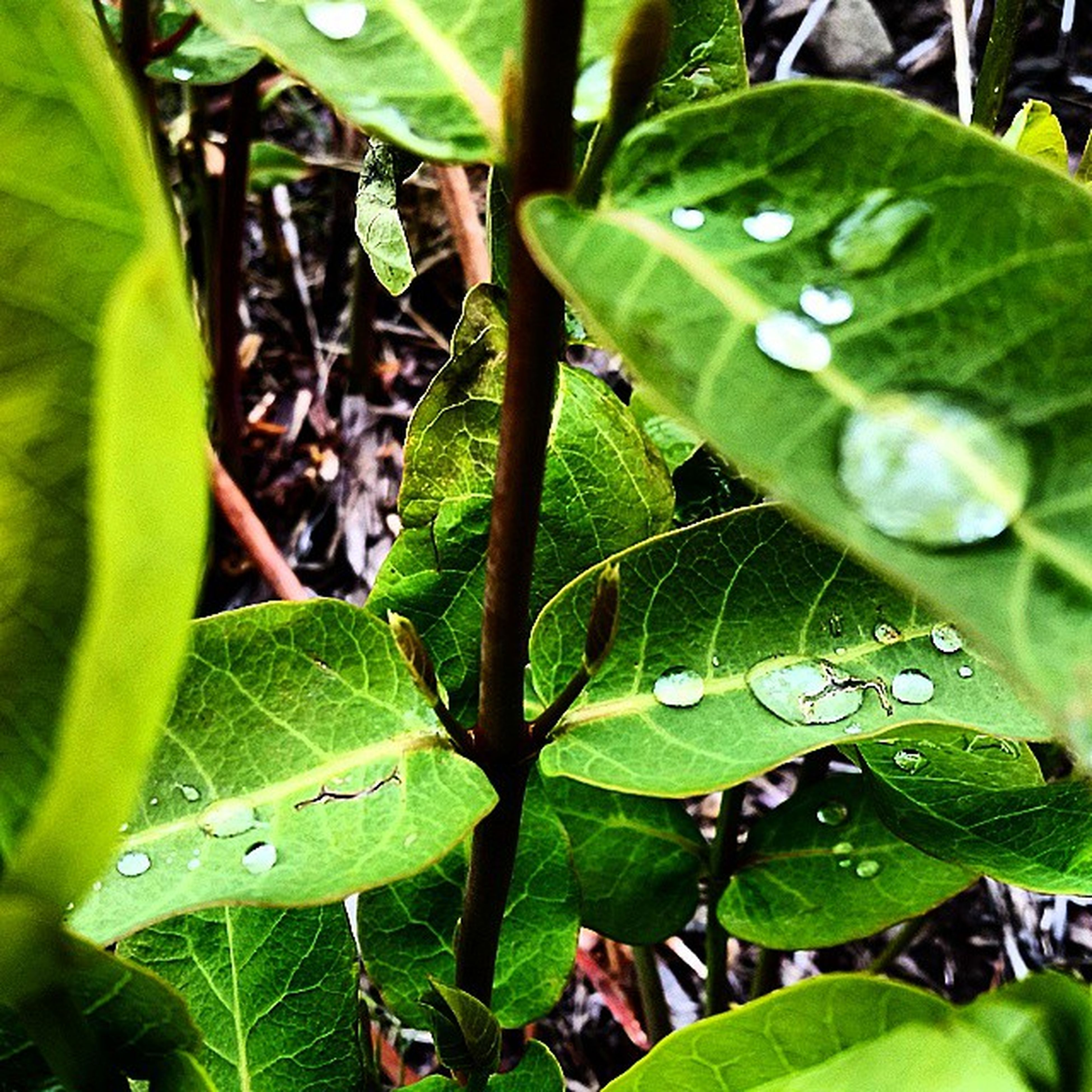 leaf, green color, growth, plant, leaf vein, close-up, nature, water, leaves, drop, freshness, high angle view, wet, beauty in nature, green, day, focus on foreground, outdoors, selective focus, no people