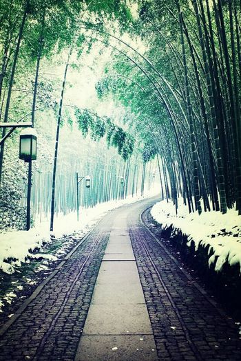 Bamboo path Japan