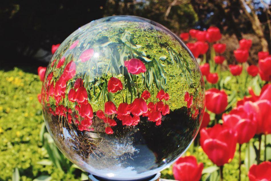 Springtime Glasball Glaskugel Tulpen Colors