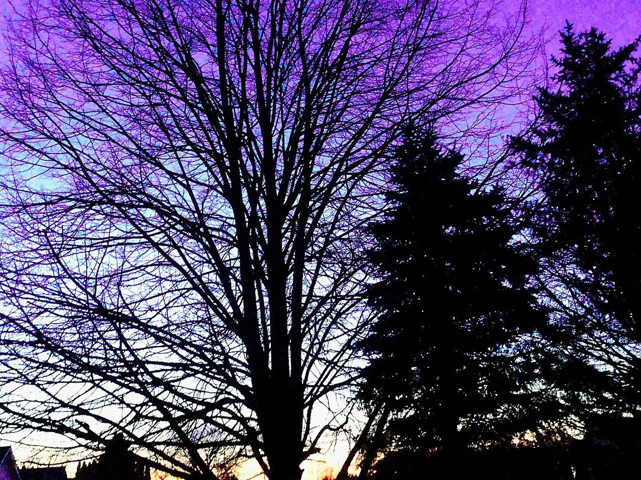 EvningGlow Nature Sky No People Outdoors Tree Beauty In Nature