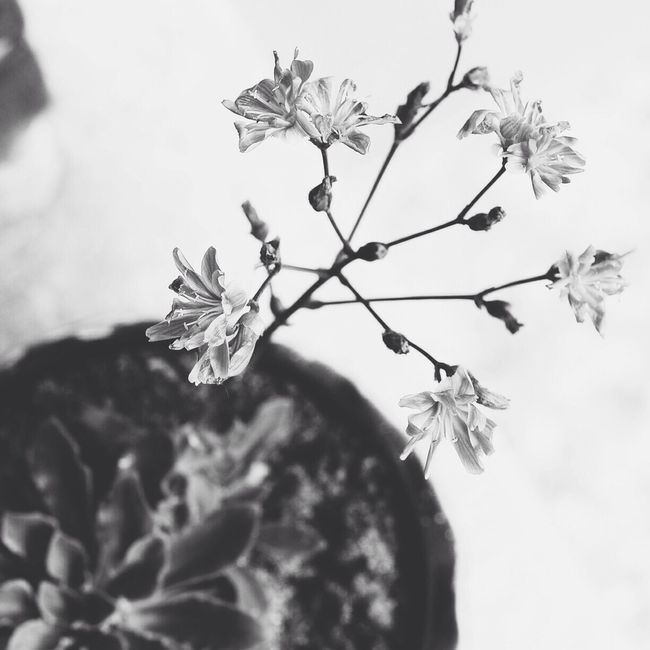 Black And White Vscocam AMPt_community EyeEmBestEdits