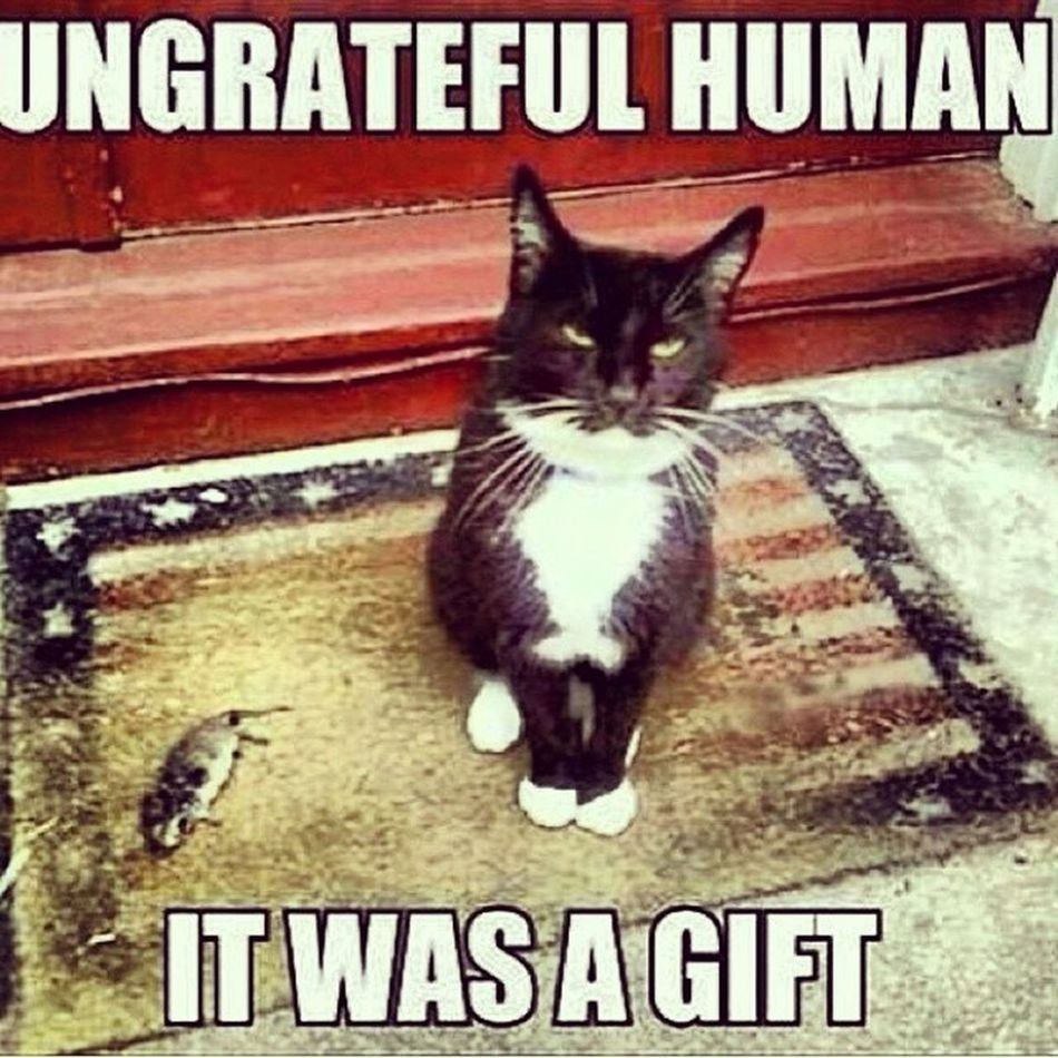 ???? Catsofinstagram Cats Fiercefelines Whitecats blackcats blackandwhitecats tabbycats butibroughtyoupresents presents catownerproblems