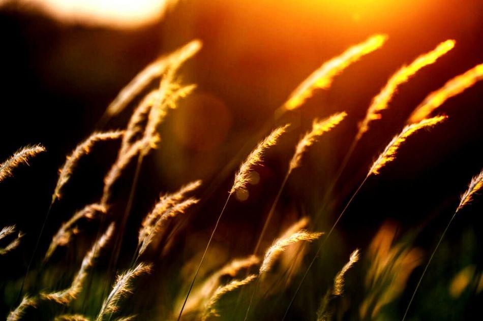 Suneffects Sunset Silhouettes Sunset Sunsetlover Sunset_collection
