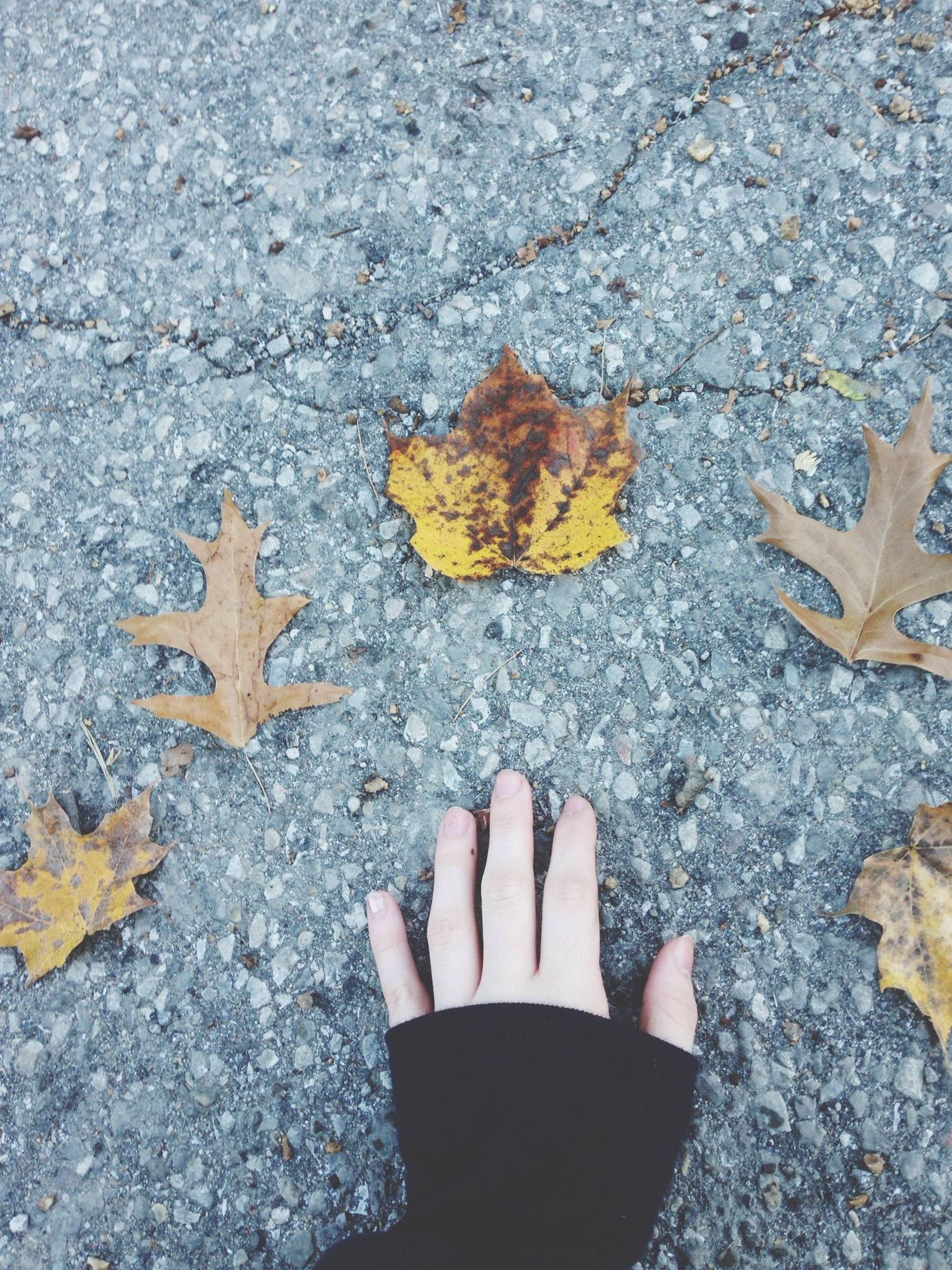 autumn, leaf, high angle view, change, street, dry, personal perspective, season, low section, leaves, asphalt, fallen, person, unrecognizable person, shoe, standing, directly above