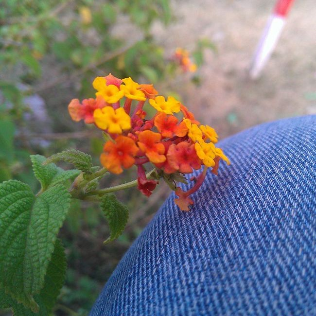 Beauty in a nutshell, literally. Flowerslove Mistyweather Htctitan