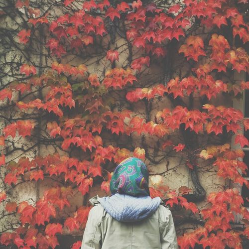 Autumn autumnleaves Nature
