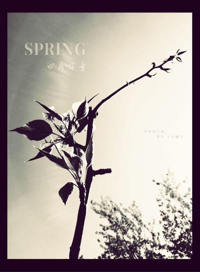 Gardening Picking Flowers  Enjoying The Sun Fresh Air Enjoying Life Dream 城市 穿行 Spring Enjoying The View By IPhone