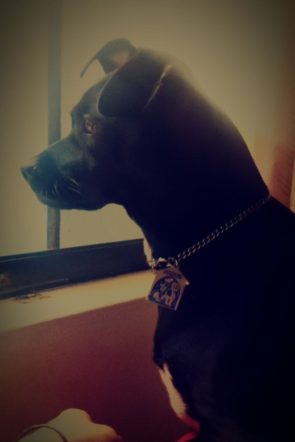 My dog. I speak spanish and english