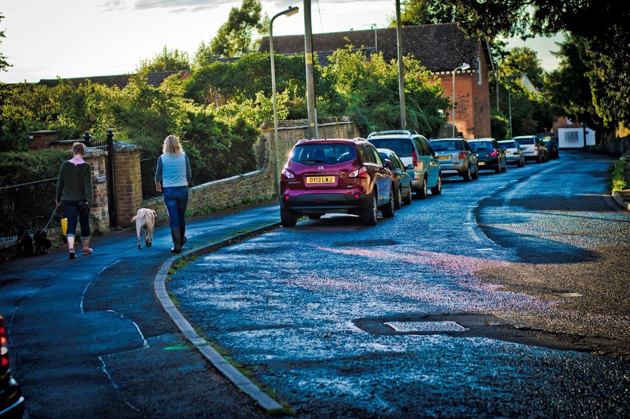 Dog Walking Road EyeEm Best Shots Popular Vanishing Point On The Move Just Around The Corner