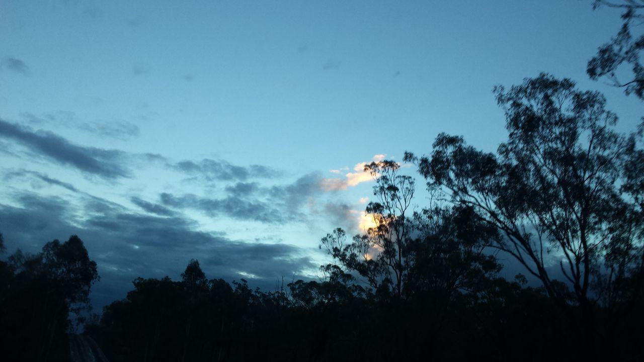 Tree Silhouette Nature Beauty In Nature Outdoors Rainy Season Landscape