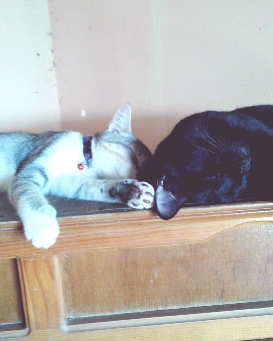 my two greatest loves Relaxing MyBABiES Lovethemsomuch Blissfully Dreaming First Eyeem Photo