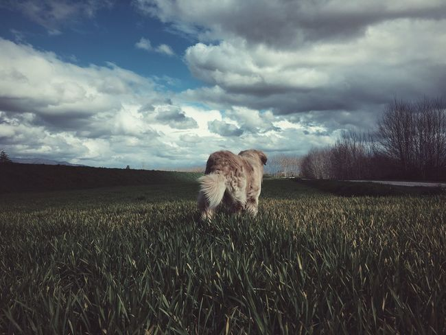 We Are Photography, We Are EyeEm Ghiro My Dog Is Cooler Than Your Kid. EyeEm Nature Lover Sky And Clouds Showcase March Clouds And Sky Golden Retriever IPhoneography EyeEm Dogs