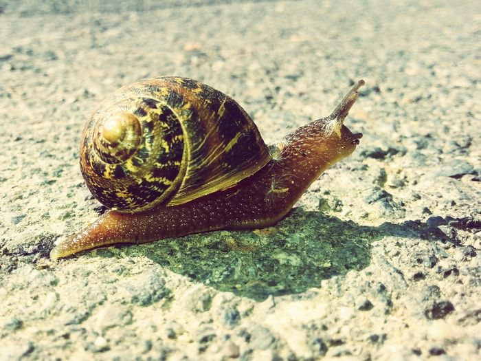Snail🐌 Hello World Popular Photos Pictureoftheday Cyprus Nature Animal_collection Summer ☀ EyeEm Best Shots Picoftheday Nature Photography