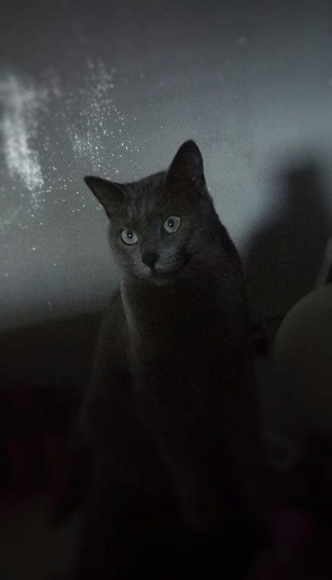 Cats Cat Catsagram Catfie