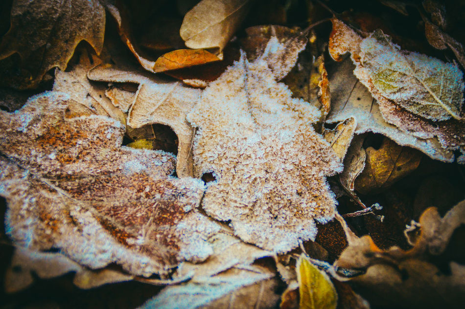 Textured  Texture Autumn Leaves Autumn Colors Frost Frosty Leaves Orange End Of Autumn Early Winter Texture In Nature Copy Space