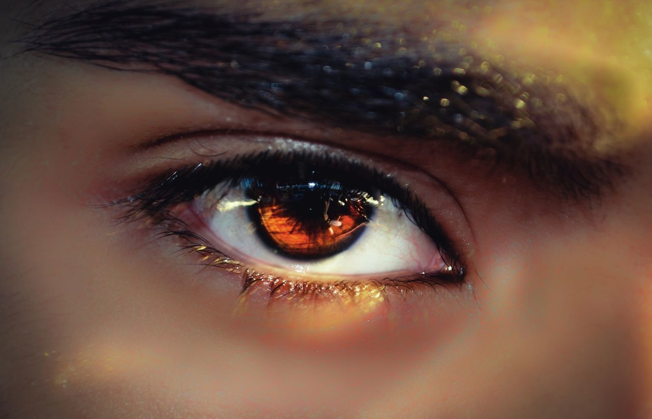 Beautiful stock photos of eyes, Brown Eyes, Close-Up, Detail, Extreme Close-Up