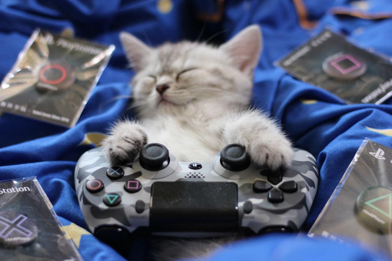 眠気を催す.... _(-ω-`_)⌒)_ Cat Catsleep Catsleeping Gamepad Playstation4 PS4 子猫 寝顔 眠り猫 졸리다