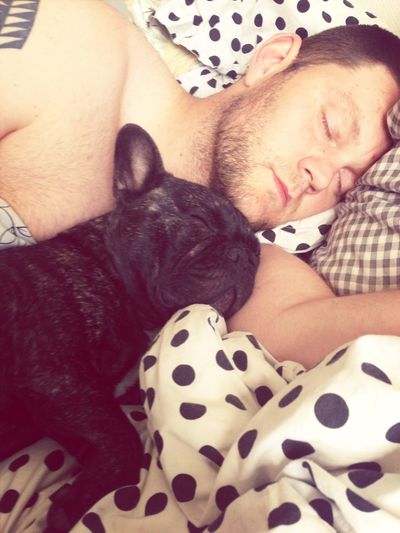 Tired French Bulldog!