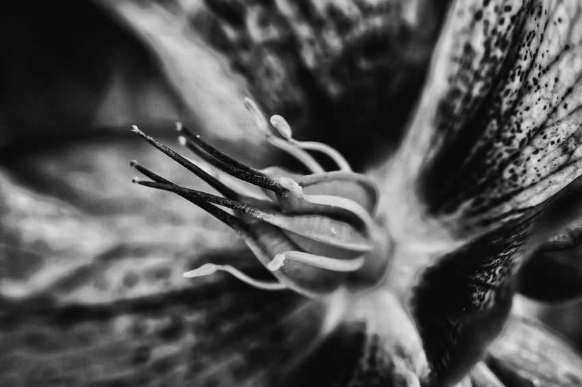 Monochrome _ Collection Beauty In The Darkness Black & White Monochrome Bnw_collection Macro Beauty Showcase April Flowerporn This Week On Eyeem Flower Porn Macro_collection Close-up Beautiful Flower Flowers, Nature And Beauty Flower Macroclique Macro Photography