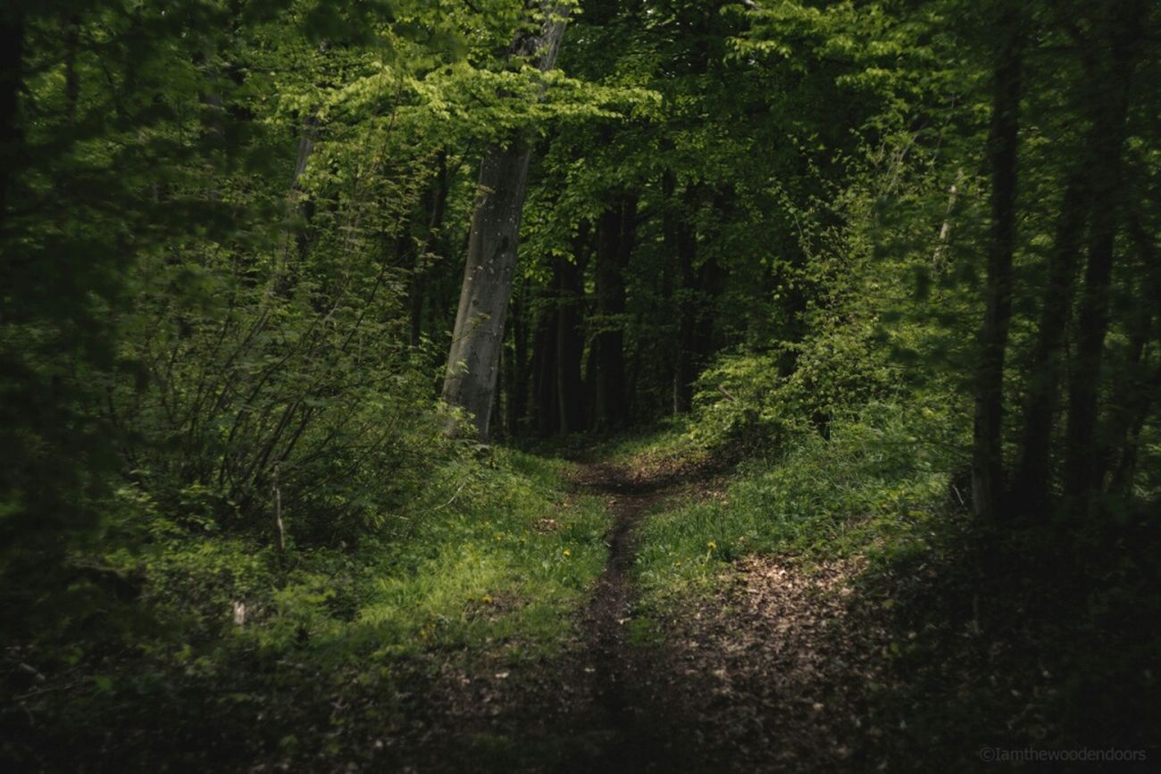 Hello World Taking Photos Hanging Out EyeEm Best Shots Huggingatree  EyeEm Best Shots - Nature Nature