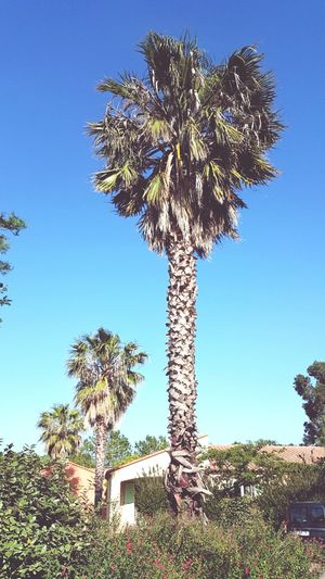 Palms Check This Out Hello World Portuguesegirl Lovethis France SouthFrance France 🇫🇷 Perpignan MyPhotography EyeEmEnjoying Life