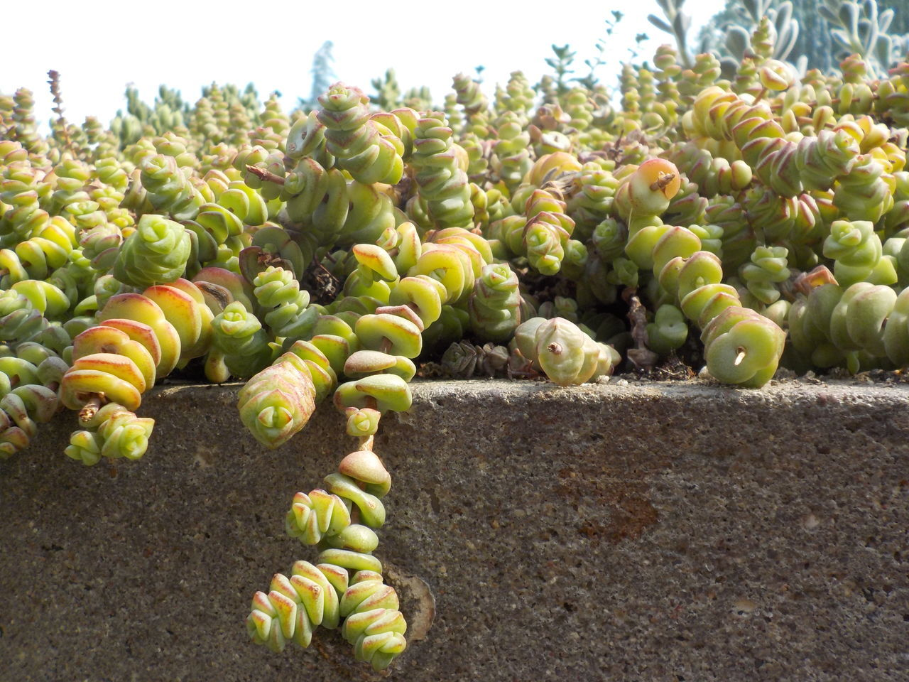 Day Daydreaming Hamburg Park Plant Planten Und Bloomen Summer