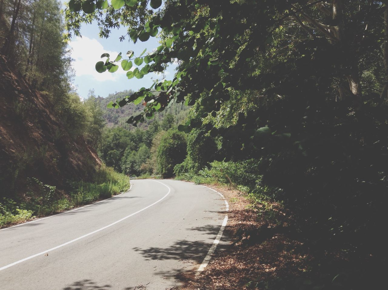 Beautiful stock photos of road, Day, Green Color, Growth, Nature