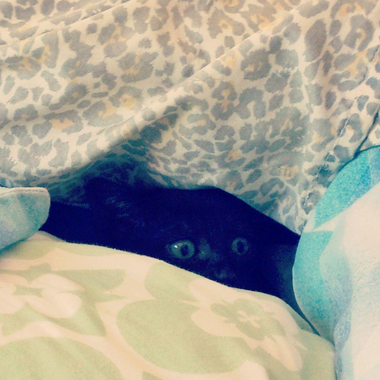 Close-up Cat Peeking Animals Cateyes Kitten Hiden