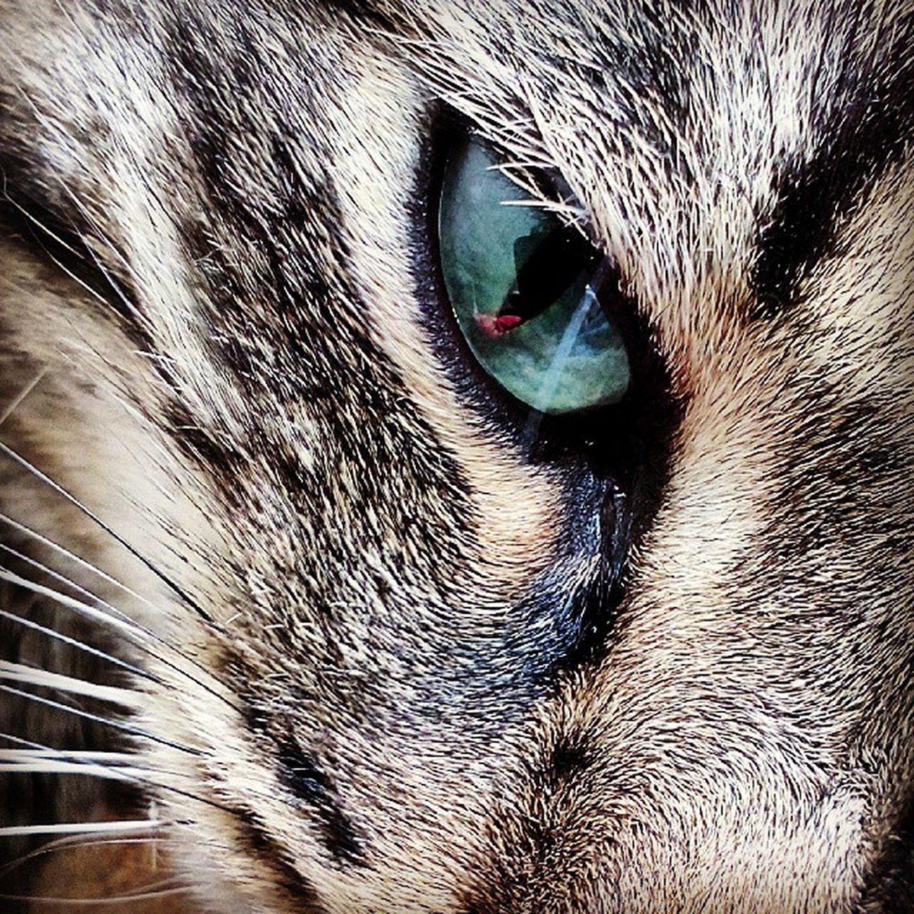 Cat Animals Melkiu