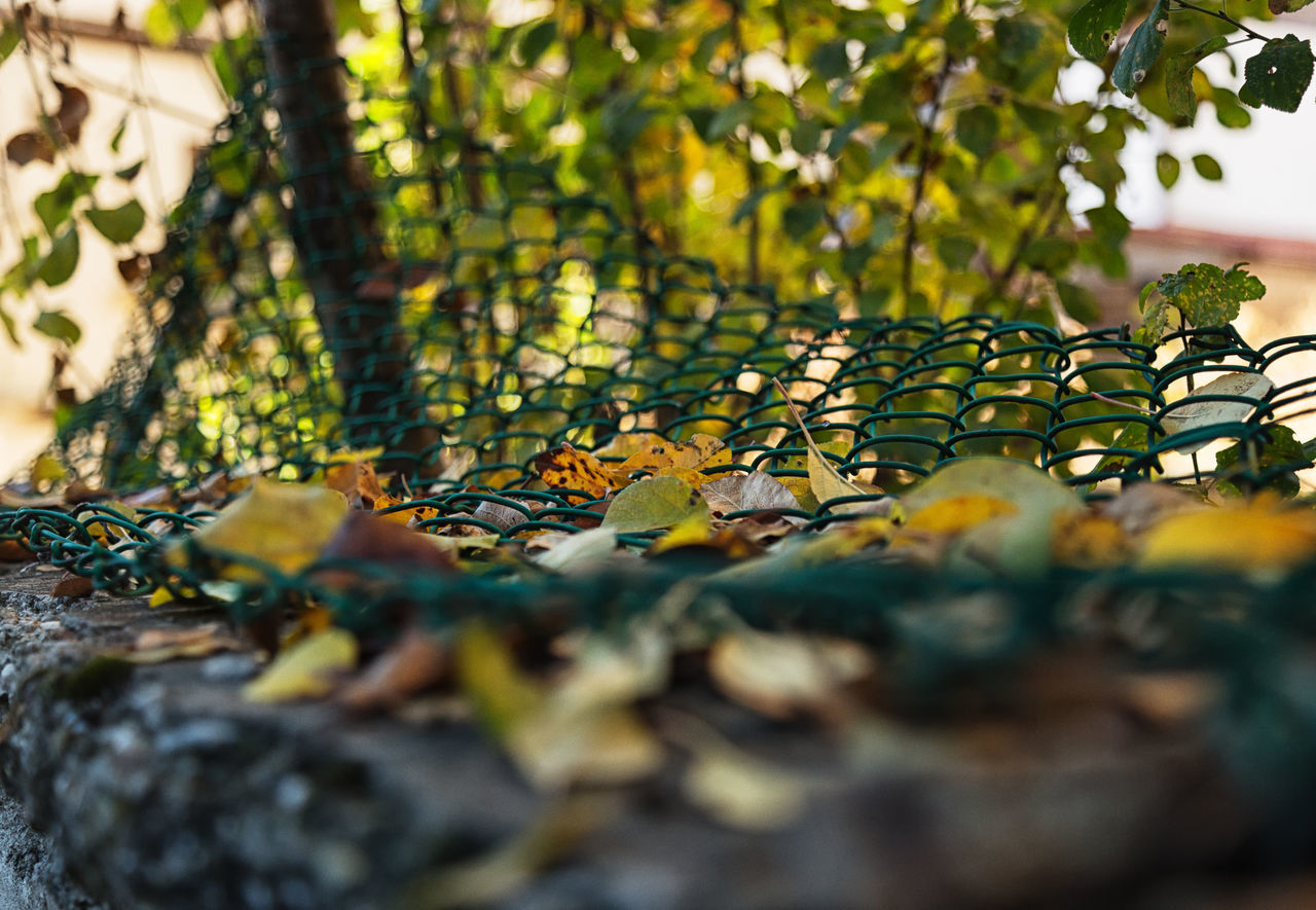 Chain Link Fence Beauty In Nature Chain Link Fence Chainlink Fence Fence Green Color Leaf Nature Outdoors Separate Separation Tree Wire