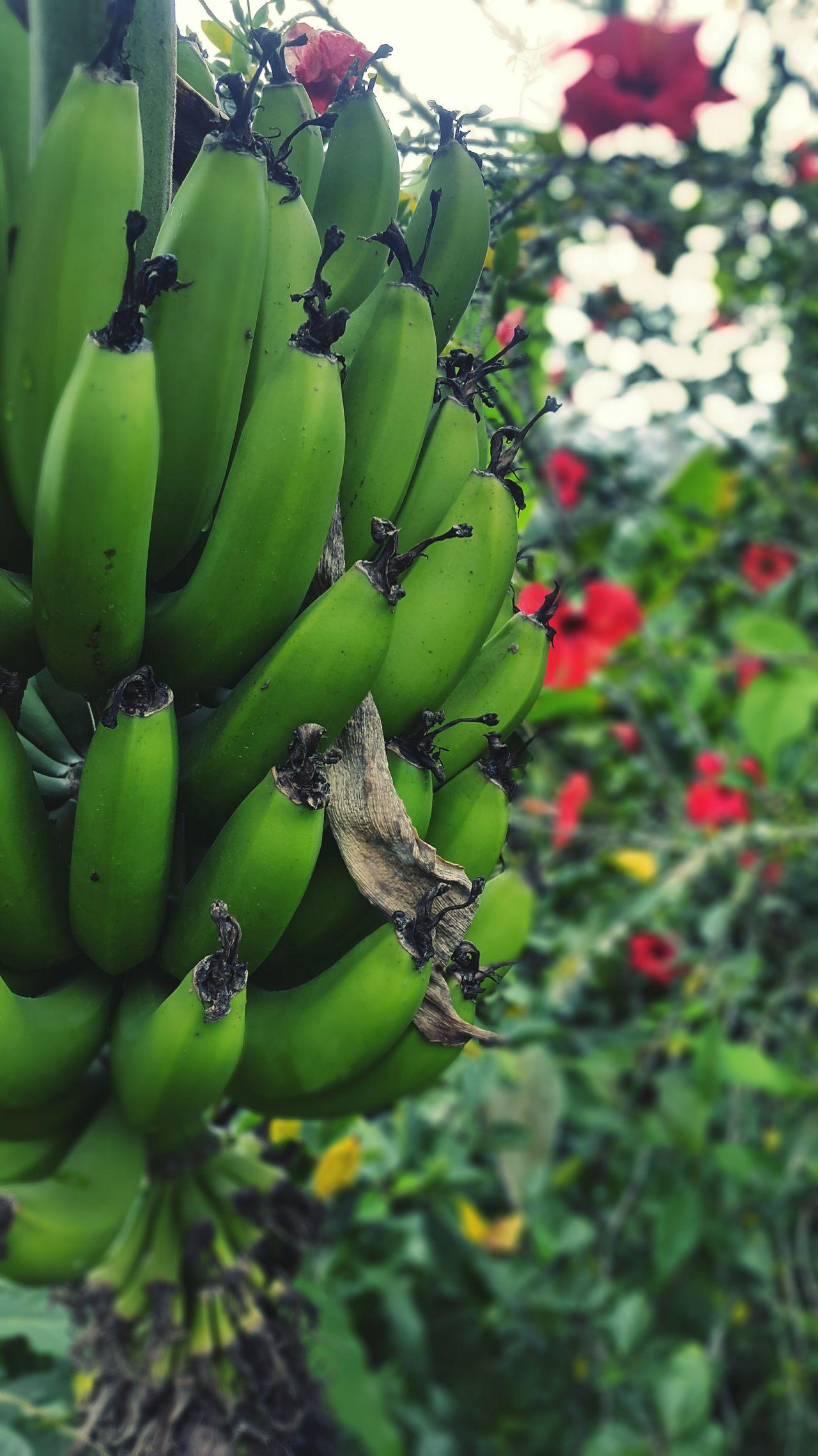 El Banano. Una fruta indispensable para la buena salud. First Eyeem Photo