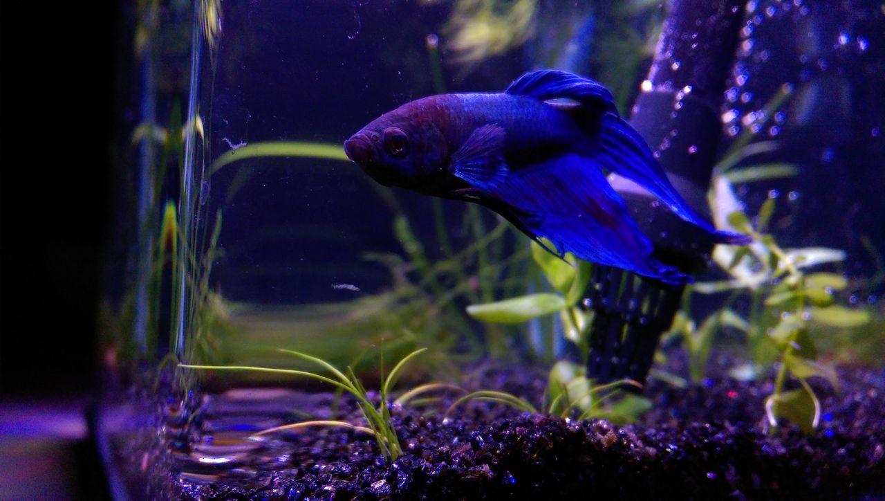 Aquarium Aquarium Photography Betta Fish Betta Lovers Bettafishcommunity Bettafish