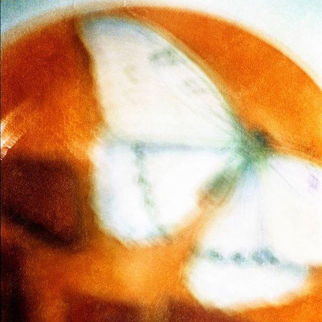 цветныекартинки Film Filmfoto Decor Design Butterfly 35mm Art Photoart фото 45*45 см украшение любого интерьера