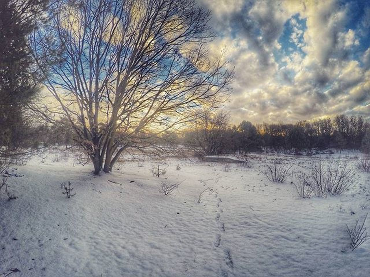 bare tree, snow, winter, cold temperature, nature, tranquility, beauty in nature, tree, tranquil scene, landscape, scenics, no people, sky, cloud - sky, outdoors, branch, day, blue