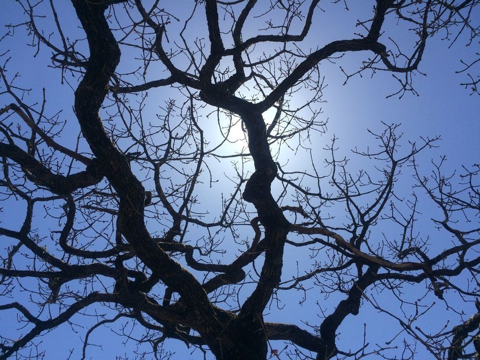 Tree Branch Bare Tree Outdoors Nature Sky Low Angle View No People Day Beauty In Nature https://youtu.be/pTmeZnLS4Hc