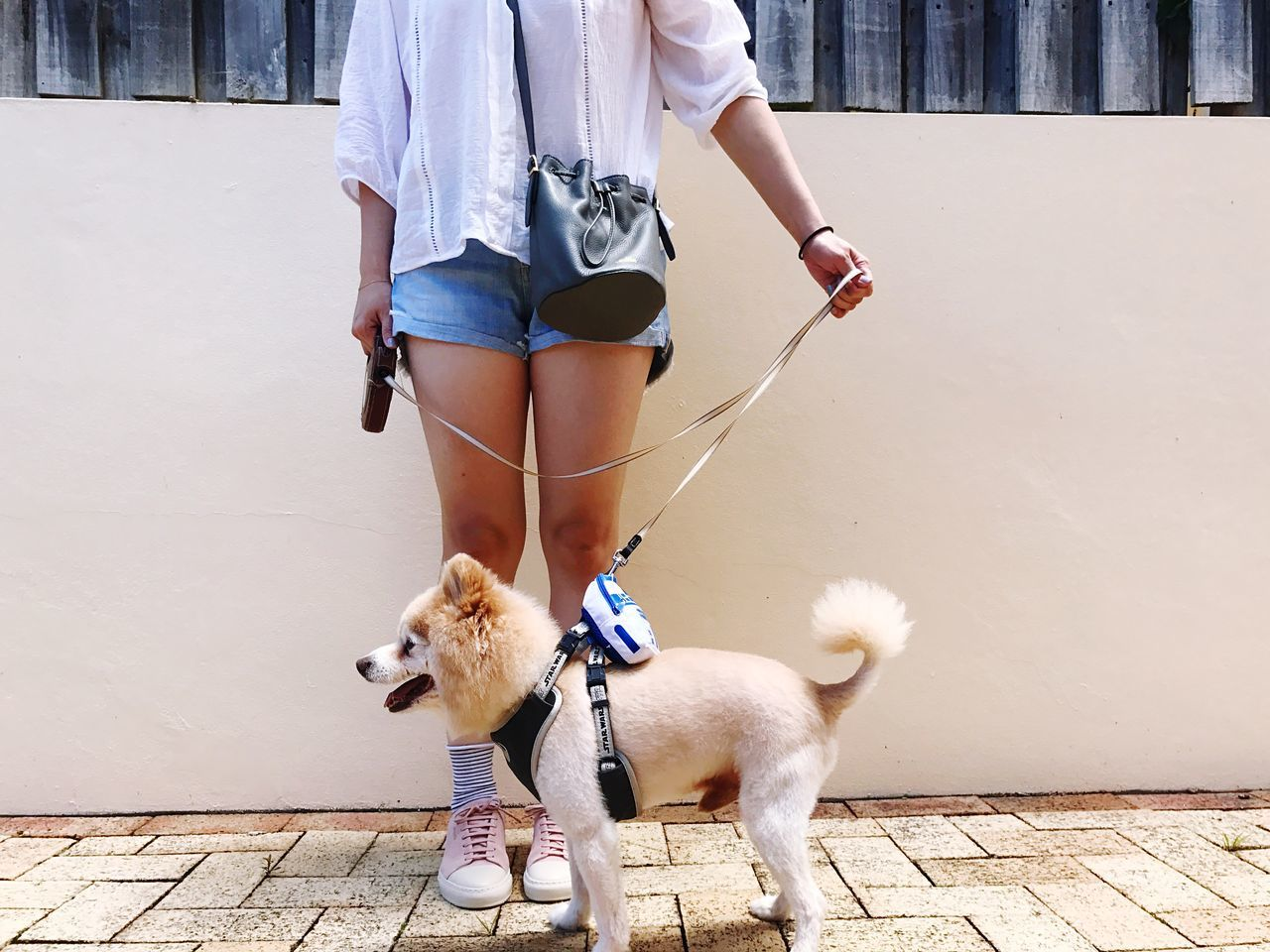 Weekend Walk with Kimba | Self Portrait with My Dog | My Dogs Are Cooler Than Your Kids