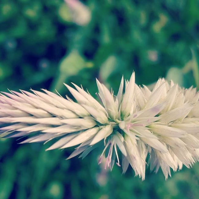 Macro S5 Kharghar Phoneography Flower Hill 13mpworks Filter Instapic