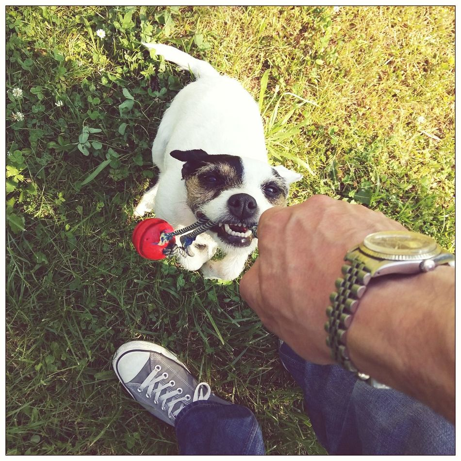LISTEN! this is mine. ☺ It's A Hard Life Dog A Dog's Life Fooling Around Skylarking Enjoying Life It's Ok Converse Converse⭐ Jackrussellterrier