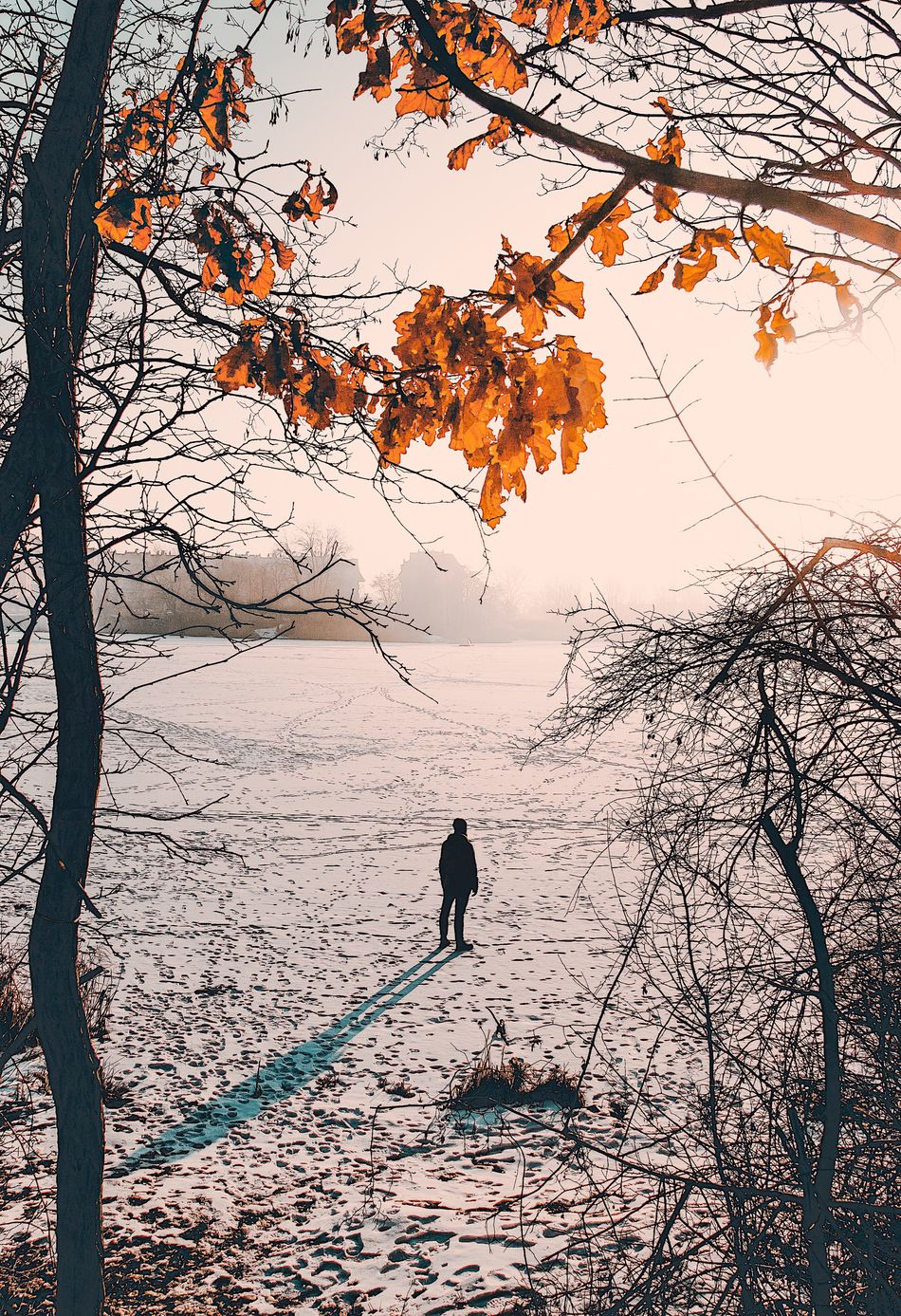 Cold Temperature Winter Tree Full Length Branch Nature Snow Outdoors Beauty In Nature One Person Autumn Day Warm Clothing Bare Tree Real People Landscape Men Only Men