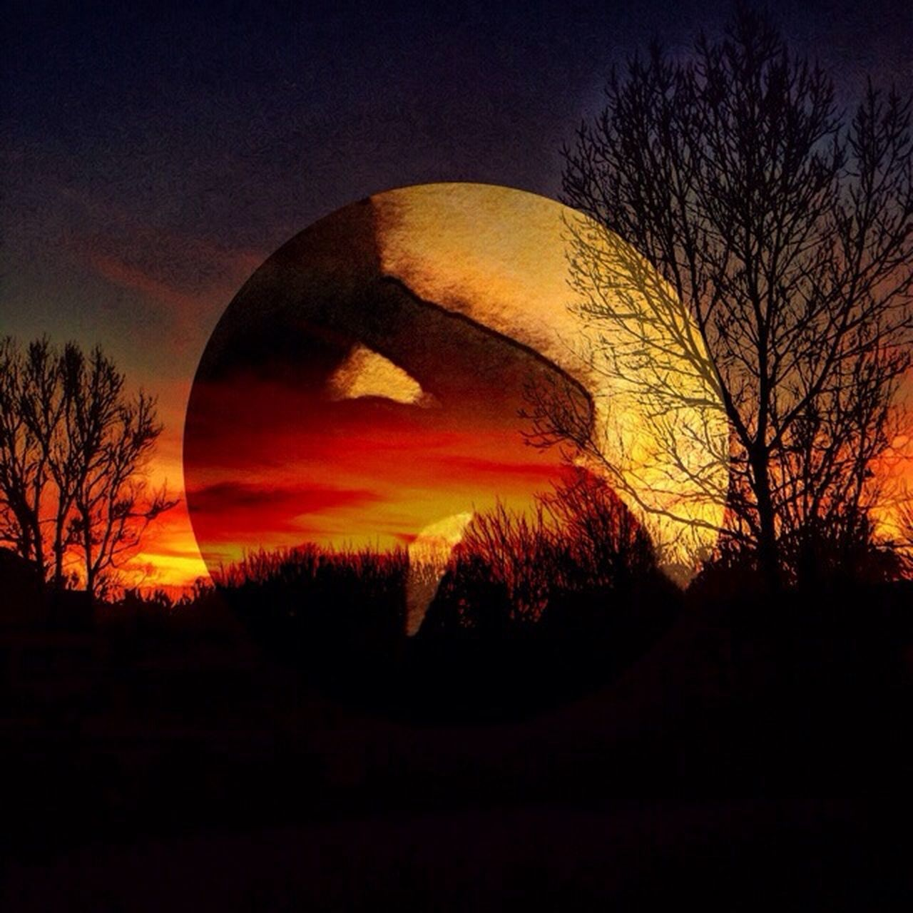 sunset, silhouette, bare tree, tree, moon, beauty in nature, nature, scenics, tranquility, sky, tranquil scene, no people, outdoors, astronomy, night, clear sky