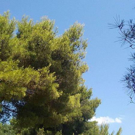 Baum Himmel Sky Croatia Kroatien Kroatien2015 Nofilter Nofilterneeded Keinfilter Ohnefilter Natur Nature Tree Trees Bäume Wald Forest Urlaub Holiday Vacation