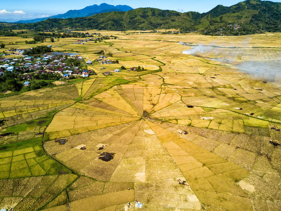 Aerial view of the spider rice fields at the beginning of the dry season near Ruteng, Indonesia. DJI X Eyeem Agriculture DJI Mavic Pro Flores Island INDONESIA Rice Spider Tourist Travel Travel Photography Aerial Aerial Photography Aerial View Destination Dji East Nusa Tenggara Flores Harvest Landscape Rice Fields  Spider Rice Fields Tourism Tropical Vacation Yellow