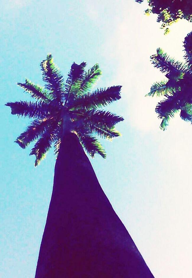 Recife, BRASIL Parque13demaio Centro *-*