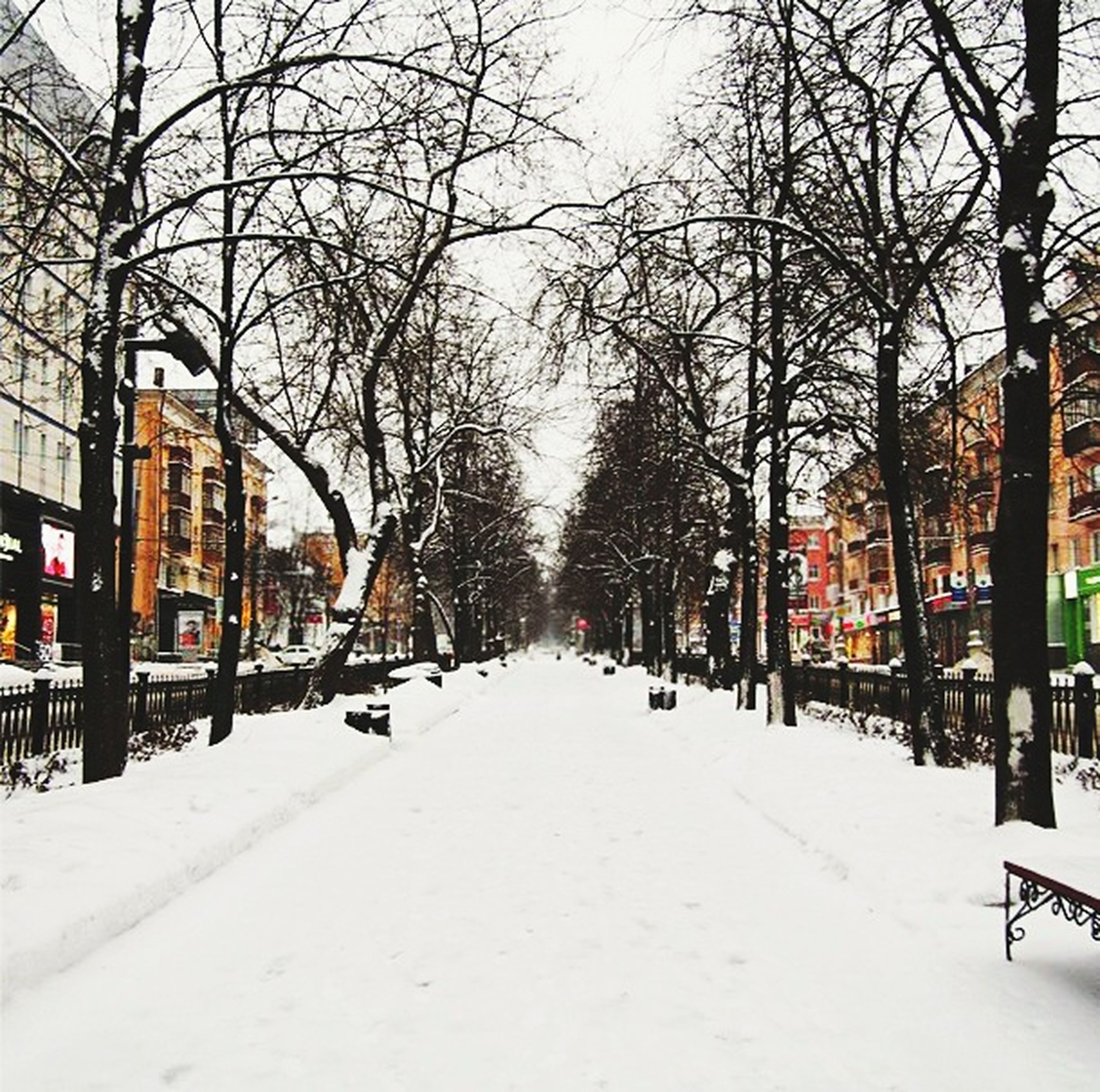snow, winter, cold temperature, season, tree, bare tree, building exterior, weather, the way forward, built structure, architecture, street, covering, transportation, city, road, treelined, diminishing perspective, car, branch