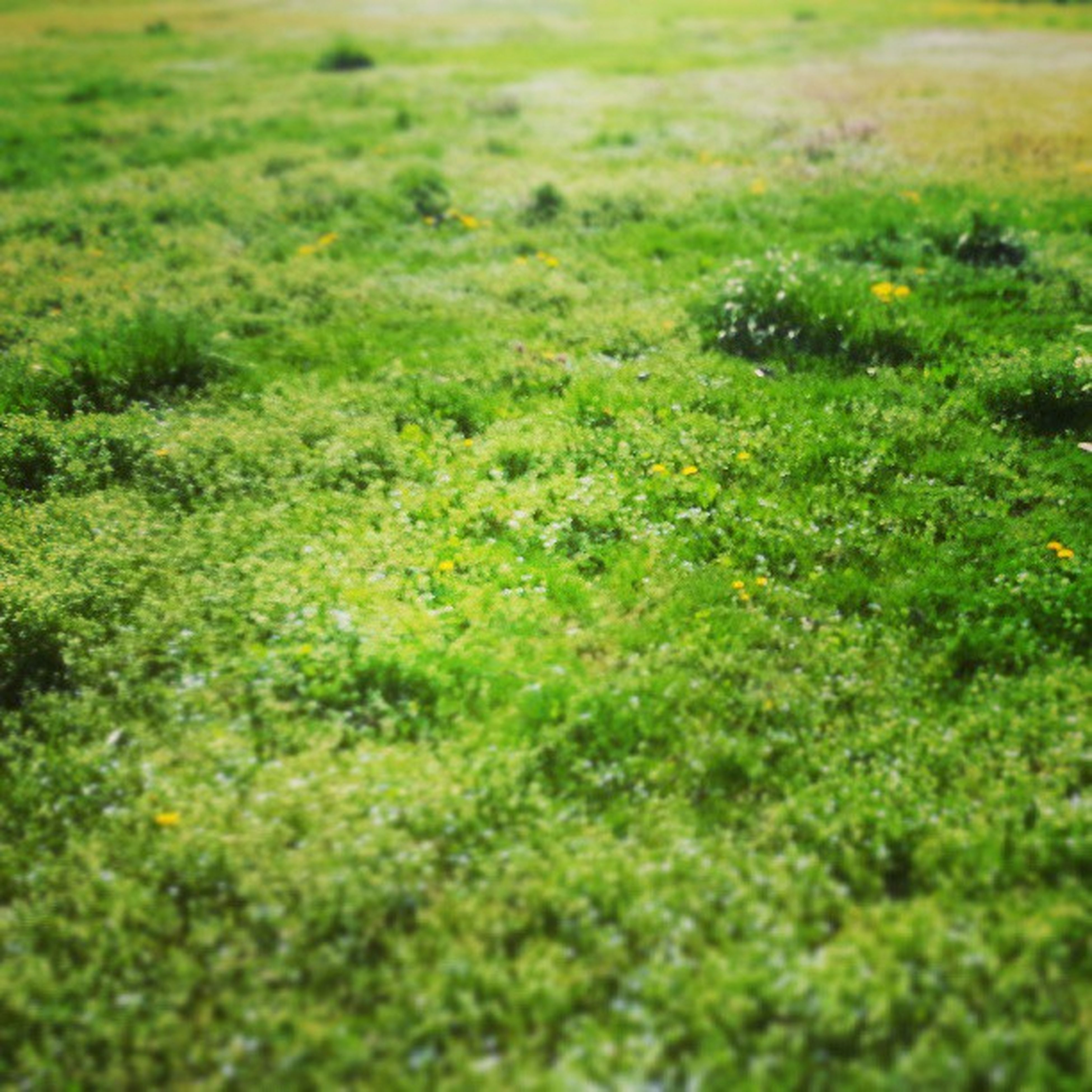 grass, green color, field, growth, grassy, selective focus, nature, beauty in nature, tranquility, plant, green, lush foliage, day, outdoors, no people, high angle view, surface level, landscape, sunlight, close-up