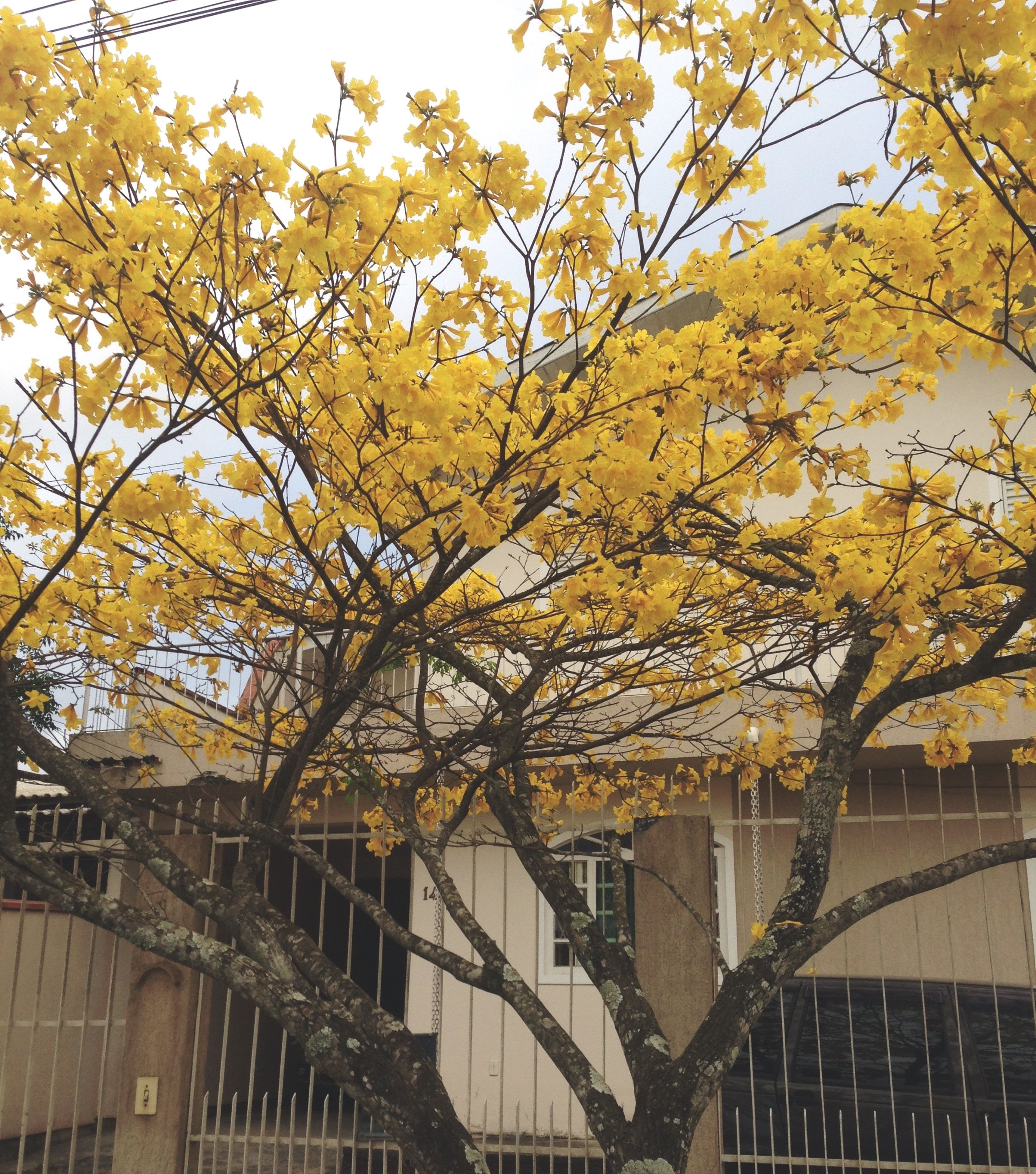 tree, yellow, built structure, architecture, branch, railing, growth, building exterior, autumn, low angle view, change, fence, nature, day, outdoors, season, sky, no people, beauty in nature, sunlight